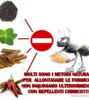 Consigli naturali per allontanare le formiche da casa e - Invasione formiche in casa ...